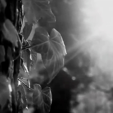 Zeppelin Universität - Campaign Film
